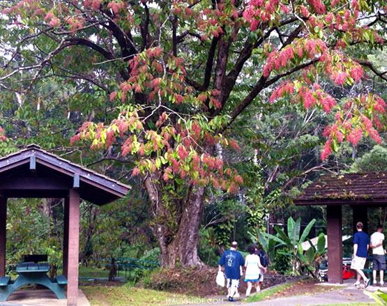 Puaa Kaa State Park